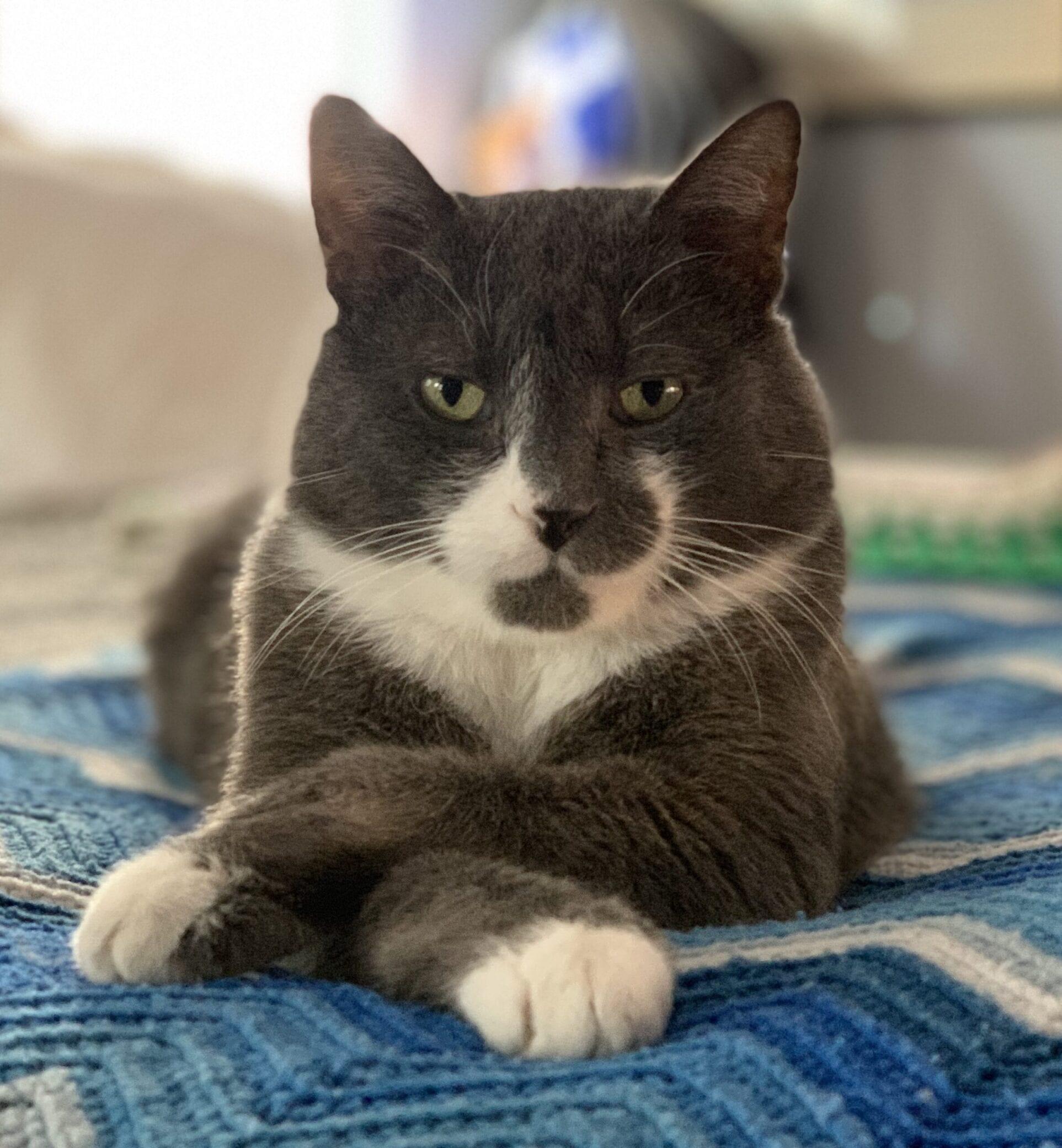 Michael's Cat Frank